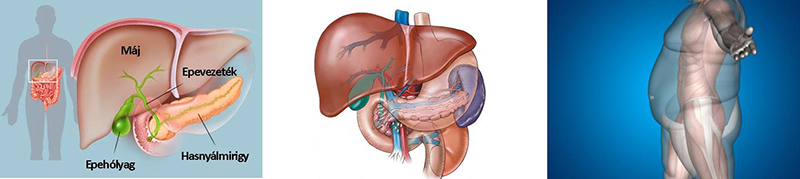 Gyakori megbetegedések, Máj- és hasnyálmirigy-méregtelenítés