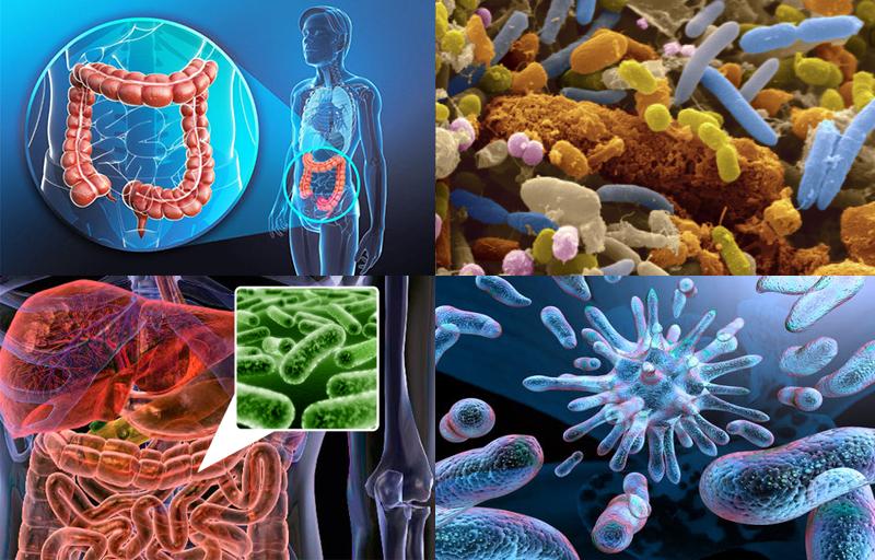 Ez a fogyókúra titka: karcsúsodjunk a jó baktériumokkal - Blikk