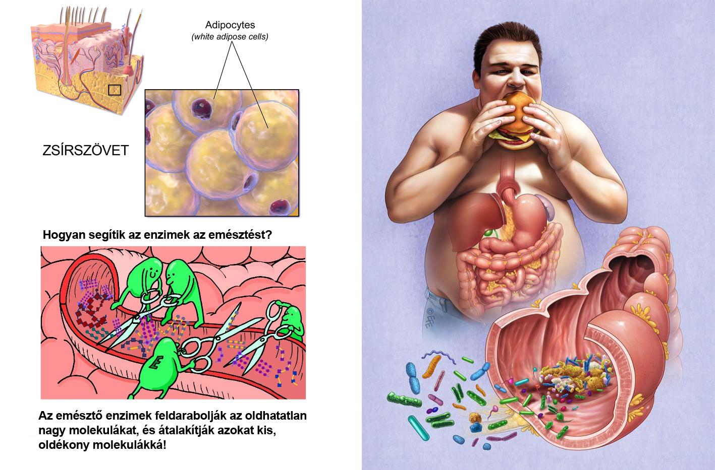 Súlyvesztés a hasnyálmirigy-gyulladással és annak megszerzésével - Típusok